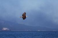 Eagle Air Alaska print