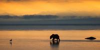 Sunrise Bear print