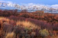 Winter Colors print