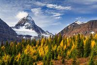 Fall At Assiniboine print