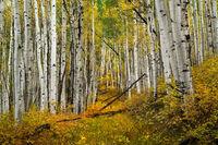 Fall Path print