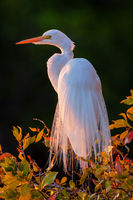 Sunset Feathers print