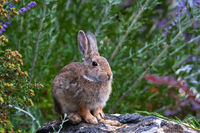 Roger Rabbit print