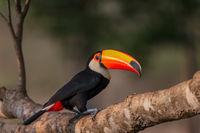 Toucan Colors print