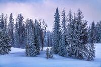 Surprise Snow print
