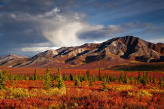 Alaska, Denali, Fall, Color, Mountain