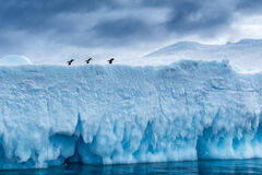 Antarctica, hope bay, iceberg, penguin
