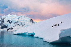 Antarctica, ice, iceberg, penguin, useful islands