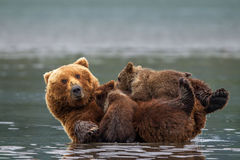 Bear, Brown Bear, Grizzly Bear, Cub, Alaska