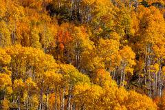 California, Eastern Sierra, Fall, Color, Mountains