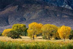 California, Eastern Sierra, Fall, Color