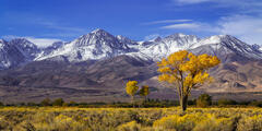 California, Eastern Sierra, Fall, Color, Mountain