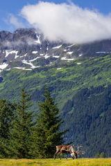 Caribou, Alaska, Kenai
