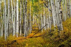Colorado, Telluride, Fall, Color, Path, Road