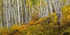 Colorado, Telluride, Fall, Color, Road, Aspen