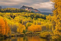 Colorado, Telluride, Cushman Lake, Fall, Color, Aspen, Tree,