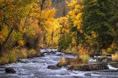 Colorado, River, fall, Cottonwood, Aspen