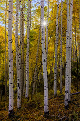 Colorado, Crested Butte, Aspen, Trees, Fall, Color