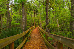 Florida, Woods, Hammock, Boardwalk, Leaves