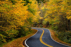 Georgia, Chatahoochee, Fall Color, Fall, Mountain, Road