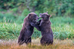 Bear, Brown Bear, Grizzly Bear, Fishing, Salmon, Alaska