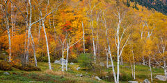 New Hampshire, White Mountains, Crawford Notch, Fall, Color