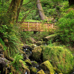 Oregon, forest, trail, footbridge, Brookoings