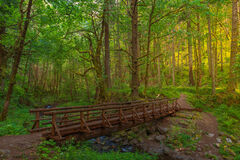 Oregon, Columbia, River, Gorge, Gorton, Creek, Trail, Footbridge