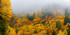 tennessee, Smoky Mountains, Mountain, Fog, Fall, Color
