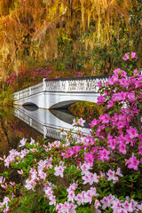 South Carolina, Charleston, Magnolia, Plantation, flower
