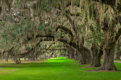 South Carolina, Oak, Trees, Tomotley, Plantation