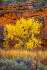 Utah, Capitol Reef, National Park, Canyon, Fall, Colors