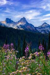 Washington, Mount Rainier, Flowers, Tatoosh Range