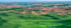 Washington, Palouse, field, green, farm, hills
