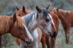 Horse, Wild Horse, North Dakota, Roosevelt Park