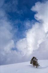 Wyoming, Yellowstone, Winter, Hayden Valley