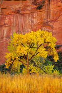 Utah, Capitol Reef, National Park, Fall, Color, Red, Canyon, limited edition, photograph, fine art, landscape, red rock