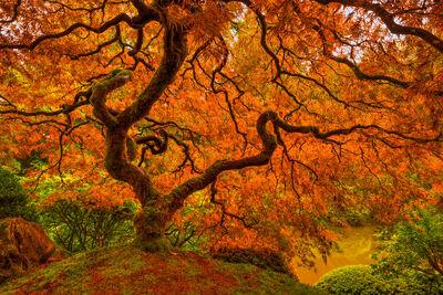 Fall Color | Oregon | Utah | Washington | Alaska