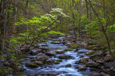 Smoky Mountains | Cades Cove | Clingmans Dome