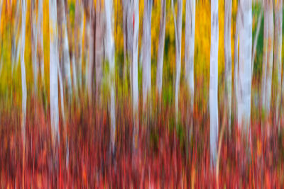 Abstract Nature Photography | Abstract Landscapes