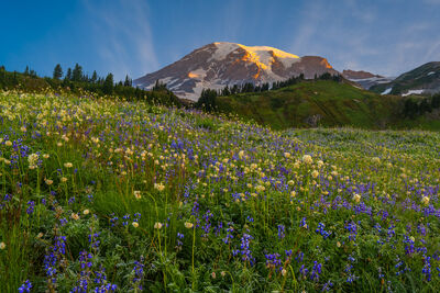 Mount Rainier | Pacific Northwest