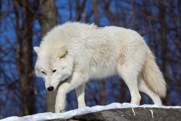 White Stealth
