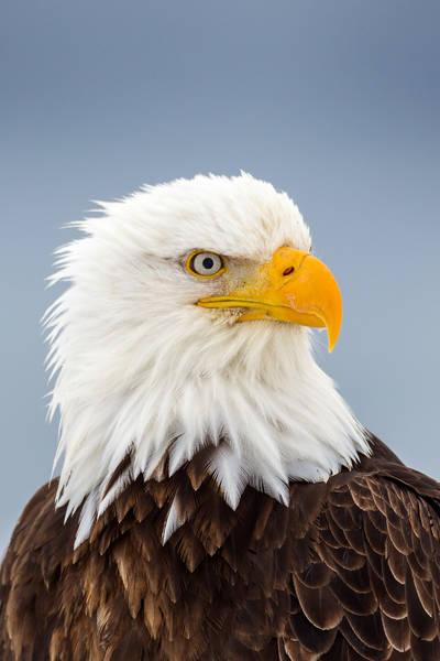 Eagle Intensity