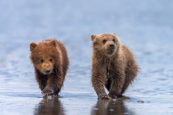 Just Us Cubs