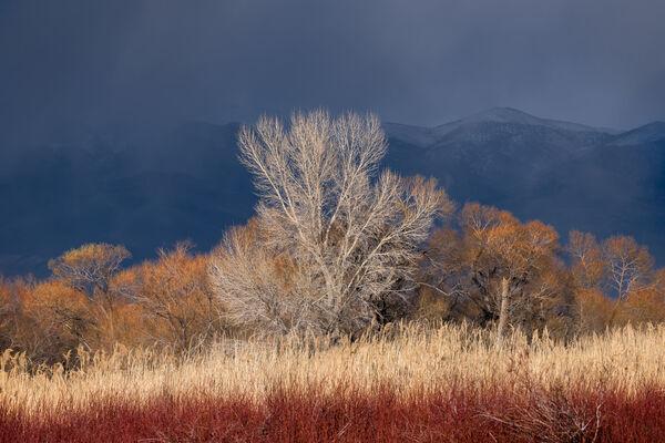 Storm Colors