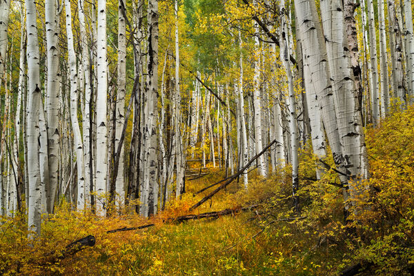 Colorado, Telluride, Fall, Color, Path, Road, limited edition, photograph, southwest colorado, fine art, landscape