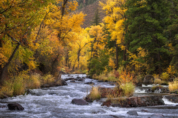 Colorado, River, fall, Cottonwood, Aspen, limited edition, photograph, fine art, landscape, fall color