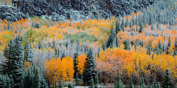 Colorado, Fall, Color, Snow, Trees, limited edition, photograph, southwest colorado, fine art, landscape, fall color