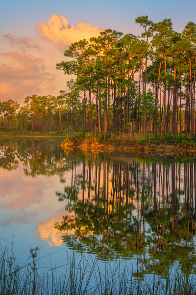 Long Pine Sunrise