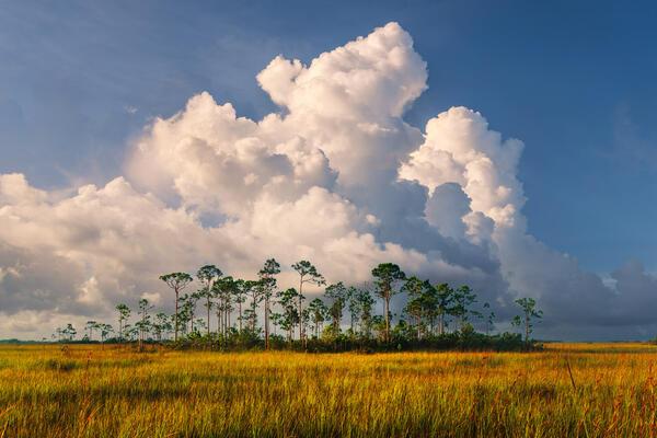 Everglades Morning